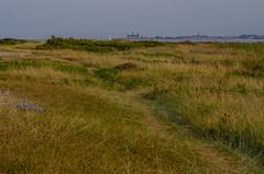 The view towards Kronborg castle (frankmh) Tags: landscape beach vegetation evening hittarp helsingborg skåneöresund denmark kronborg helsingør