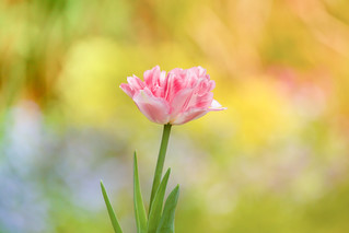 Spring Time in the Garden 😊