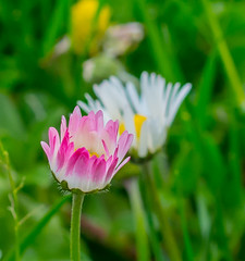 Clover Perspective. (Omygodtom) Tags: wildflower clover composition perspective red tamron dof d7100 bokeh macro field plant