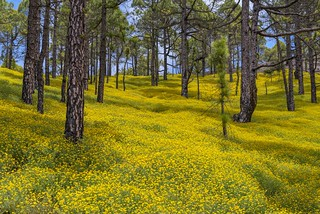 *La Palma @ Spring Forest II*