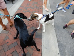 dogs socializing (Just Back) Tags: dog hund perro fur hair tail snout greet friends walk leash collar paws jaws fun columbia sc summer