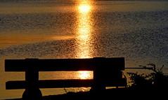 Qand le soleil incendie le lac (Diegojack) Tags: vaud suisse saintsulpice d7200 nikon nikonpassion lumière incendie soleil matin contrejour banc contrastes fabuleuse