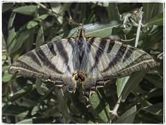 MARIPOSA (BLAMANTI) Tags: mariposas insectos hermosa hermoso fragil canon canonpowershotsx60 blamanti