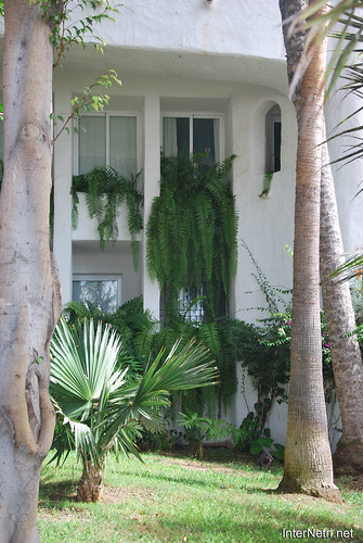 Готель Хардін Тропікаль, Тенеріфе, Канари  InterNetri  306