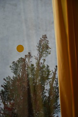 Sun (Natalie Squire) Tags: dsc0443 vegetation curtain dot colours colors yellow plant tree germany window glass behind sun winter