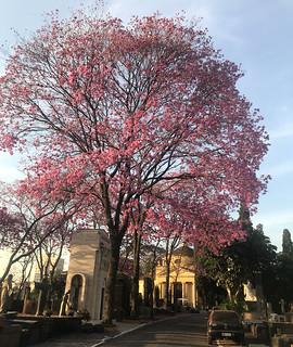 São Paulo Cemetery Chapel, Bairro Pinheiros, Brazil.