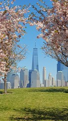 Cherry Blossoms at Liberty State Park, NJ (SomePhotosTakenByMe) Tags: libertystatepark statepark park newjersey jerseycity newyork newyorkcity lowermanhattan downtown city stadt innenstadt outdoor usa amerika america urlaub vacation holiday wtc manhattan financialdistrict worldtradecenter 1wtc cherryblossom kirschblüte baum tree brookfieldplace worldfinancialcenter