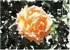 Zu Lehr und Trost ist uns geschrieben (amras_de) Tags: rose rosen ruža rosa ruže rozo roos arrosa ruusut rós rózsa rože rozes rozen roser róza trandafir vrtnica rossläktet gül blüte blume flor cvijet kvet blomst flower floro õis lore kukka fleur bláth virág blóm fiore flos žiedas zieds bloem blome kwiat floare ciuri flouer cvet blomma çiçek zeichnung dibuix kresba tegning drawing desegnajo dibujo piirustus dessin crtež rajz teikning disegno adumbratio zimejums tekening tegnekunst rysunek desenho desen risba teckning çizim