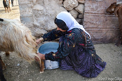 20180330-_DSC0183.jpg (drs.sarajevo) Tags: sarvestan ruraliran iran nomads farsprovince chamsatribe