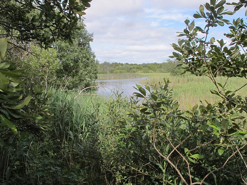 Reedbed and lake