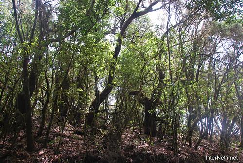 Національний парк Гарахонай, Гомера, Канарські острови  InterNetri  0715