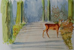 World Watercolor Month Day 12, Forest animal (chando*) Tags: forêt chevreuil roedeer worldwatercolormonth aquarelle watercolor exploredjuly122018485