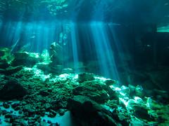 Cenotes Dos Ojos in Yucatan, Mexico