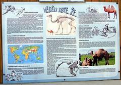 26.7.18 Chynov and camels 20 (donald judge) Tags: czechia south bohemia toulava chynov zahostice camels