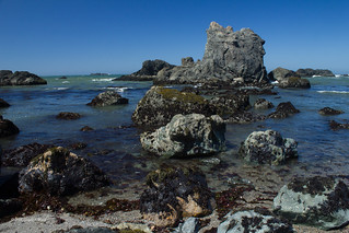 Sonoma Coast 9229