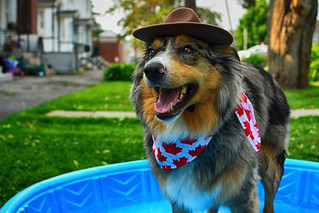 Royal Canadian Mounted Pupper