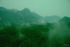 トコヨウツシヨ (atacamaki) Tags: xt2 23mm f14 xf fujifilm jpeg撮って出し atacamaki nature forest japan gunma 高速バス green tree 常世 現世 うたうたい交響曲