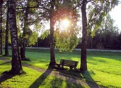 birkenallee (lualba) Tags: baum tree licht sonnenuntergang sundown green nature natur bank bench