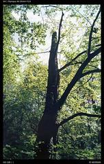 Ektar (Falcdragon) Tags: olympusxa100kodakkodakektalenstagger olympusxa ektar100 kodak ektar film kodakfilm analog belgium woods forest tree