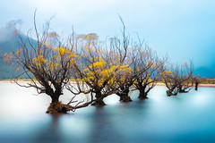 The Witches of Glenorchy (Achint Thomas) Tags: witch lake blue abstract longexposure pond standing water jetty idyllic still calm wakatipu queenstown glenorchy newzealand vacation plants colorful afternoon rainy overcast village outside