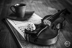 Violon Passion (davcsl) Tags: art bw blackwhite biancoenero davcsl europe france gard nimes nîmes languedocroussillon monochrome monotones noiretblanc noiretblancblackwhite nb occitanie southoffrance violon violoniste violin music musique instrumentàcordes