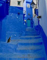 The Wait (Alex L'aventurier,) Tags: chefchaouen maroc morocco bluecity villebleue urban urbain stairs escaliers porte door chat cat animal medina médina street rue