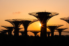 Singapore supertree sunrise (Finbarr Fallon) Tags: gardens by bay singapore sunrise architecture supertrees