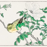 Brown-eared Bulbul and Rosa Rugosa illustration from Pictorial Monograph of Birds (1885) by Numata Kashu (1838-1901). Digitally enhanced from our own original edition. thumbnail