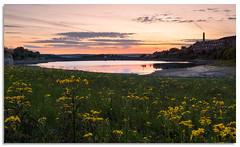 Leeming wild flower sunset (.Wadders) Tags: leeming leemingreservoir wildflowers yorkshire reservoir d600 2018 ngc nikkor1635mmf4 sunset