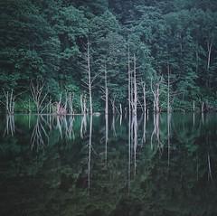 hasselblad (haco-otoko) Tags: analog filmisnotdead フィルム film mediamfomat 6×6 hasselblad ハッセルブラッド ブローニー 120 carlzeiss