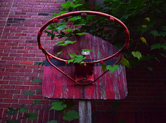 Red Hoop (jna.rose) Tags: abandoned basketball hoop red outdoor brick texture textures textured wood painted leaves green nikon natural light photography