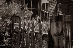 Vacancy (CameraOne) Tags: gate home abandoned ruins urbandecay statepark bodie ghosttown california owensvalley sepia monochrome wideangle bokeh depthoffocus cameraone windows blackandwhite canon6d canonef1740mm raw polarizer wood outdoor fence weathered worn weeds overgrown