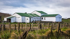 The Barber Shop (David Recht) Tags: newzealand oceanbeach hawkesbay nz sheep sheering barber barn earthpixnz