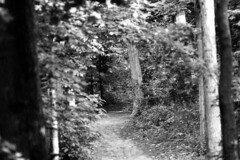 Forested Trail (pmvarsa) Tags: summer 2018 june analog bw blackandwhite film 135 ilford ilfordfp4plus fp4 fp4plus 125iso nikonsupercoolscan9000ed nikon coolscan manfrotto sekonic cans2s pentax spotmatic pentaxspotmatic classic camera takumar 300mm telephoto knowledge teaching education passonknowledge knowledgetransfer outdoor neighbourhood trees leaves needles path trail forest woods trunk depth waterloo ontario canada