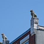 Leeuwen op het dak thumbnail