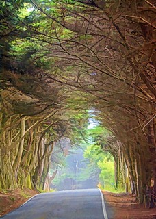 And into the forest I go, to lose my mind and find my soul. John Muir