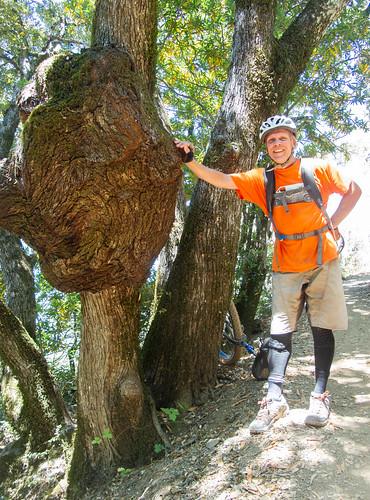 Oak burl