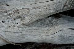 2018 05 06 105 Hunting Island, SC (Mark Baker.) Tags: 2018 america baker carolina hunting island mark may north south us usa beach day outdoor pattern photo photograph picsmark spring states texture united
