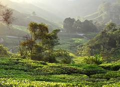8H1_0315286 (kofatan (SS Tan) Tan Seow Shee) Tags: malaysia pahang cameronhighland copthornehotelsungeipalasbohplantation bharatteaplantation robinsonfall smokehouse brinchang tanahrata kofatan