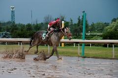 Aheadbyacentury (epicDi) Tags: thoroughbred horses horseracing forterie forterieracetrack sloppy ontariocanada iamcanadian