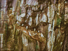 Birds on mountain side (Jill Rowland) Tags: birds alaska usa mountainside brown canonphoto abstract abstractart manipulatedphoto