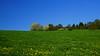 spring (Lutz Koch / off and away some weeks) Tags: idsteinerland idstein taunus zissenbach wiese meadow spring frühling himmel blau blue sky elkaypics lutzkoch fridaydogwalk polfilter polarize polarized
