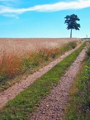 Still a long way to go.... (Tobi_2008) Tags: weg strasse street baum tree landschaft landscape natur nature sachsen saxony deutschland germany allemagne germania