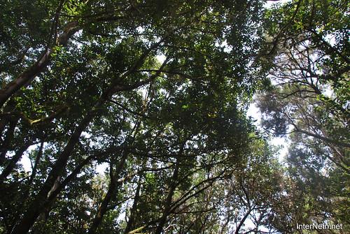 Національний парк Гарахонай, Гомера, Канарські острови  InterNetri  0703