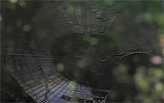 Spider Web (ioensis) Tags: spider web orbweaver macro jdl ioensis 4658b0001807101b©johnlangholz2018 july 2018 webstergroves missouri mo