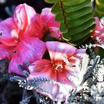 Beautiful Flowers thumbnail