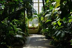 Entre por essa porta agora... (Lívia.Monteiro) Tags: botanic garden ireland dublin summer flowers sun interior outside day door flora spring