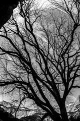 Stick Around a While (Thomas Hawk) Tags: america california nationalpark newyearseve newyearseve2011 usa unitedstates unitedstatesofamerica yosemite yosemitenationalpark yosemitevalley tree fav10