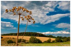 Un soir d'été (Pascale_seg) Tags: paysage landscape campagne country countryside field countryscape été summer soir evening moselle lorraine grandest france nikon earth terre nature sky nuages clouds tree fleur flower