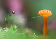 """shroom to moss, over"" (marianna_a.) Tags: p2380294 mushroom moss bokeh sdof macro mariannaarmata fungi orange shroom web strand"